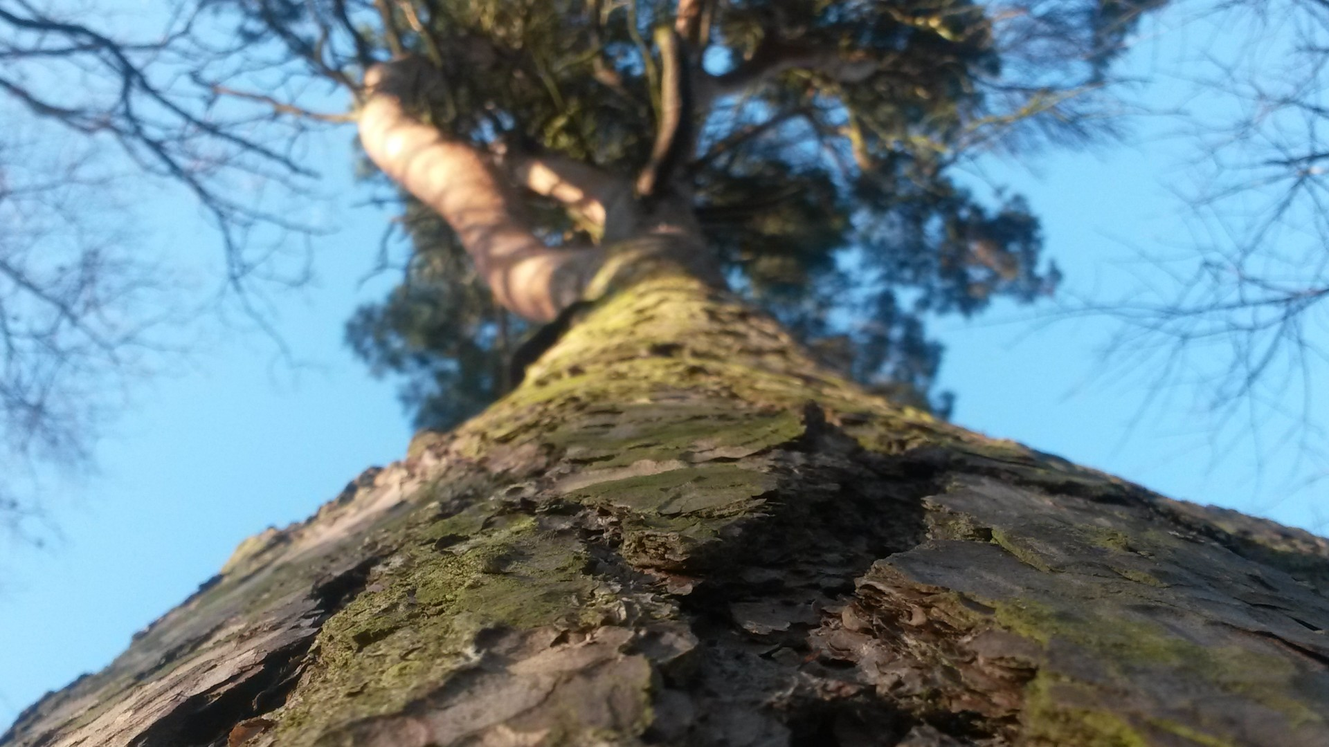 Providers of expert tree consultancy and advice