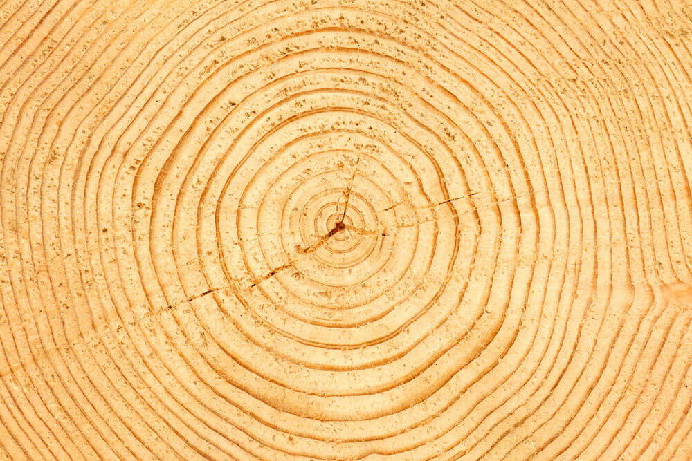 A Tree Trunk With  Rings